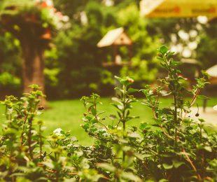 Tipps für pflegeleichten Garten von 123haus.at